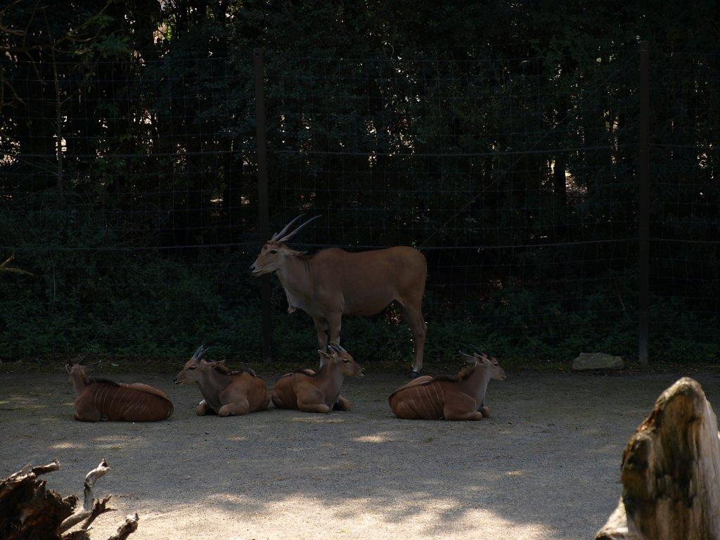 zoo__19_.JPG