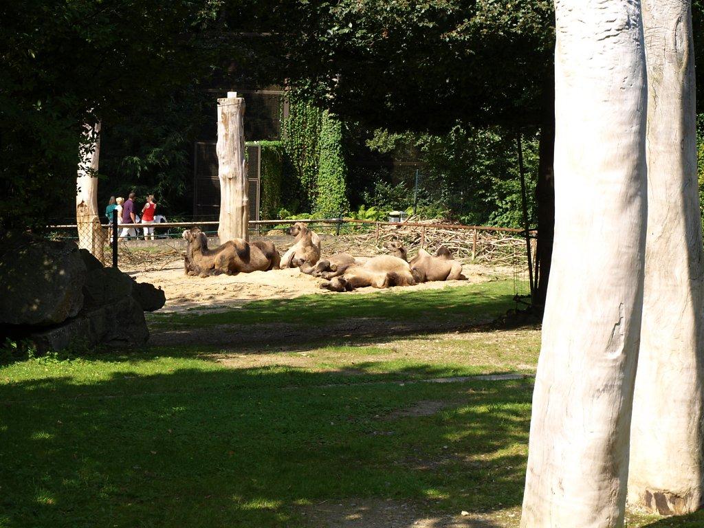 zoo__21_.JPG