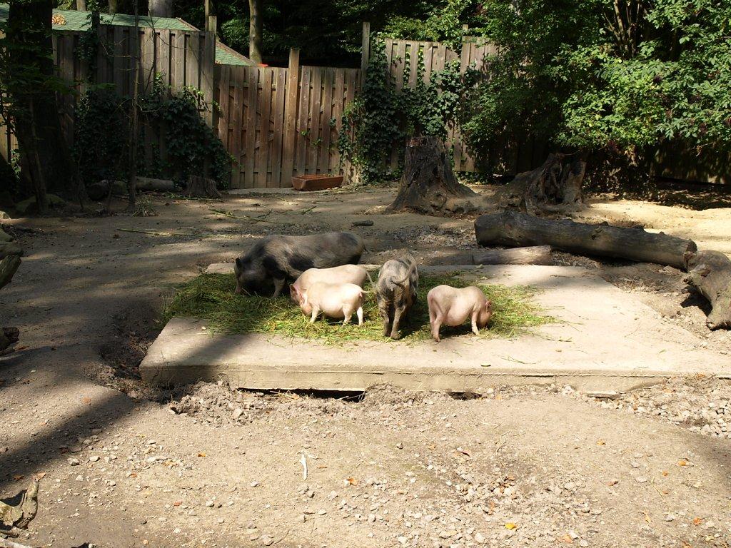 zoo__23_.JPG