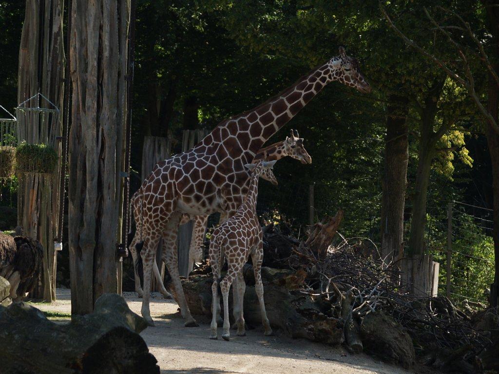 zoo__36_.JPG
