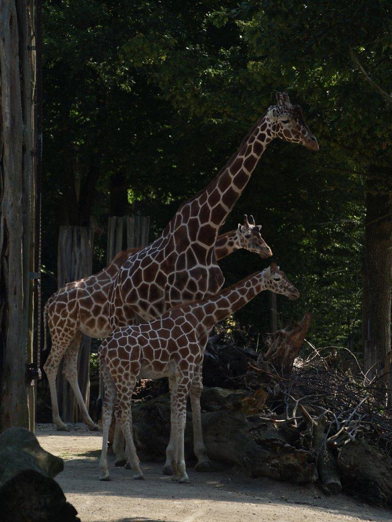 zoo__37_.JPG