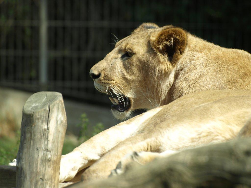 zoo__63_.JPG