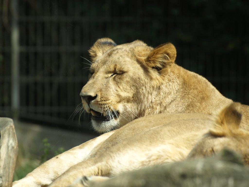 zoo__67_.JPG