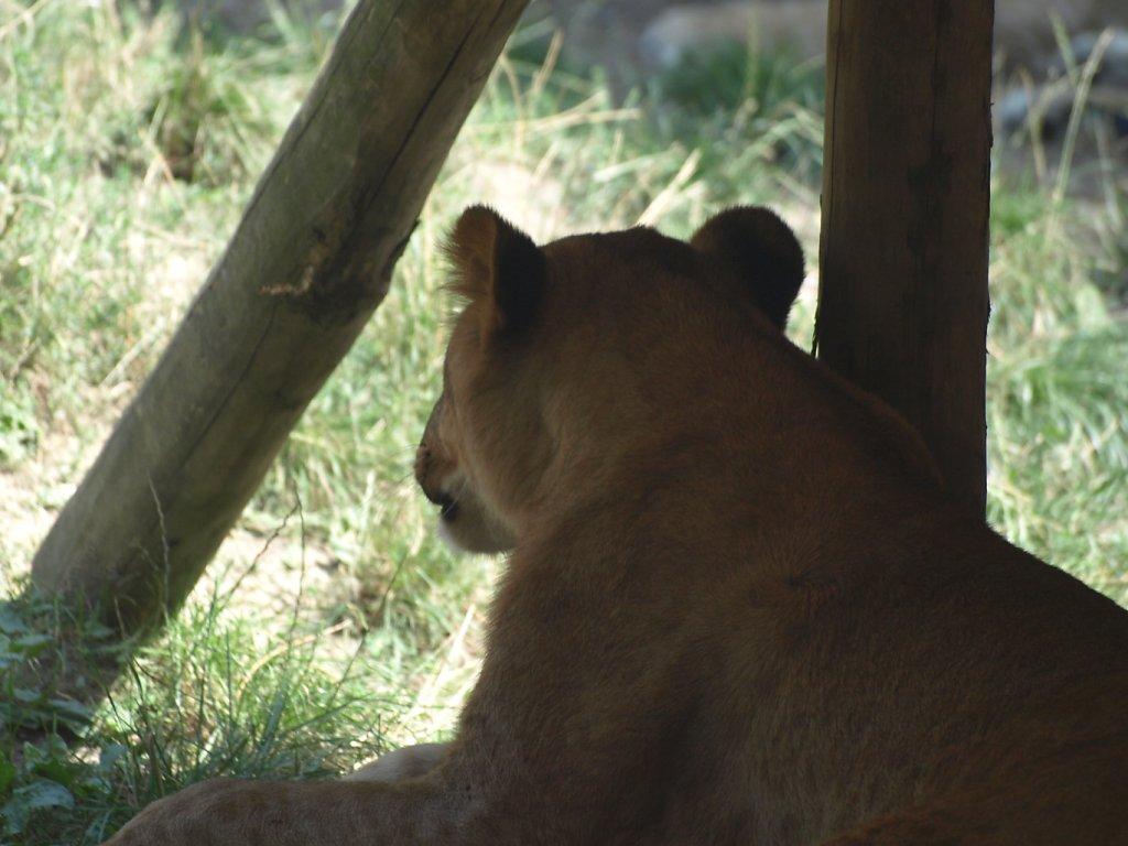 zoo__71_.JPG