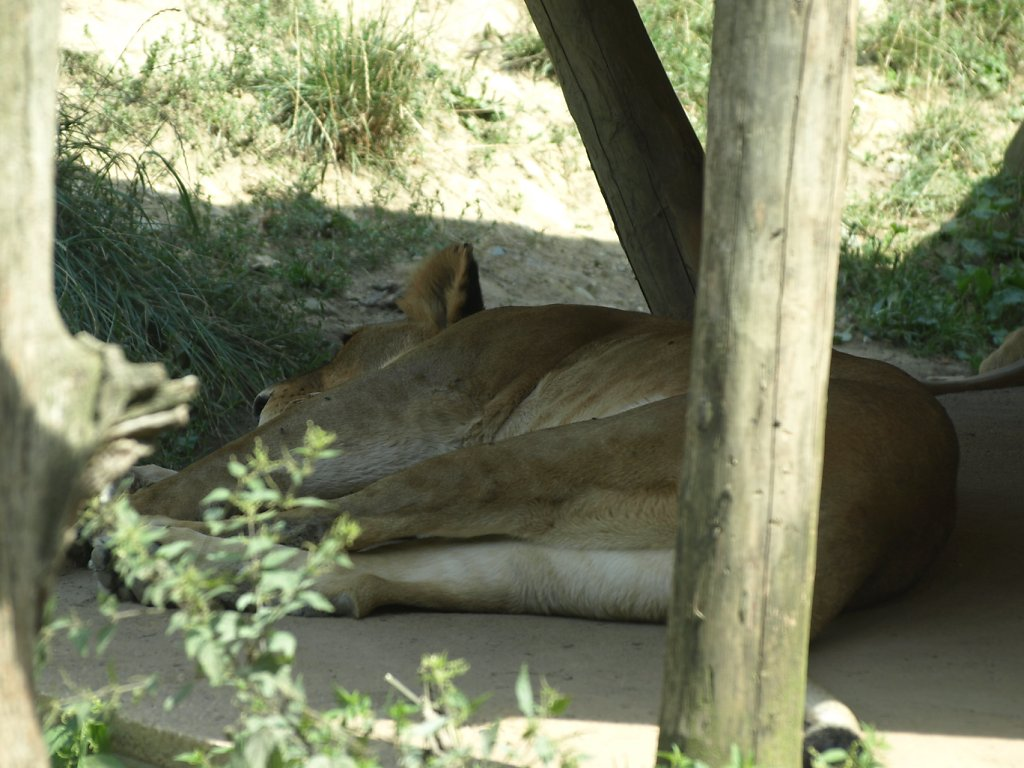 zoo__73_.JPG