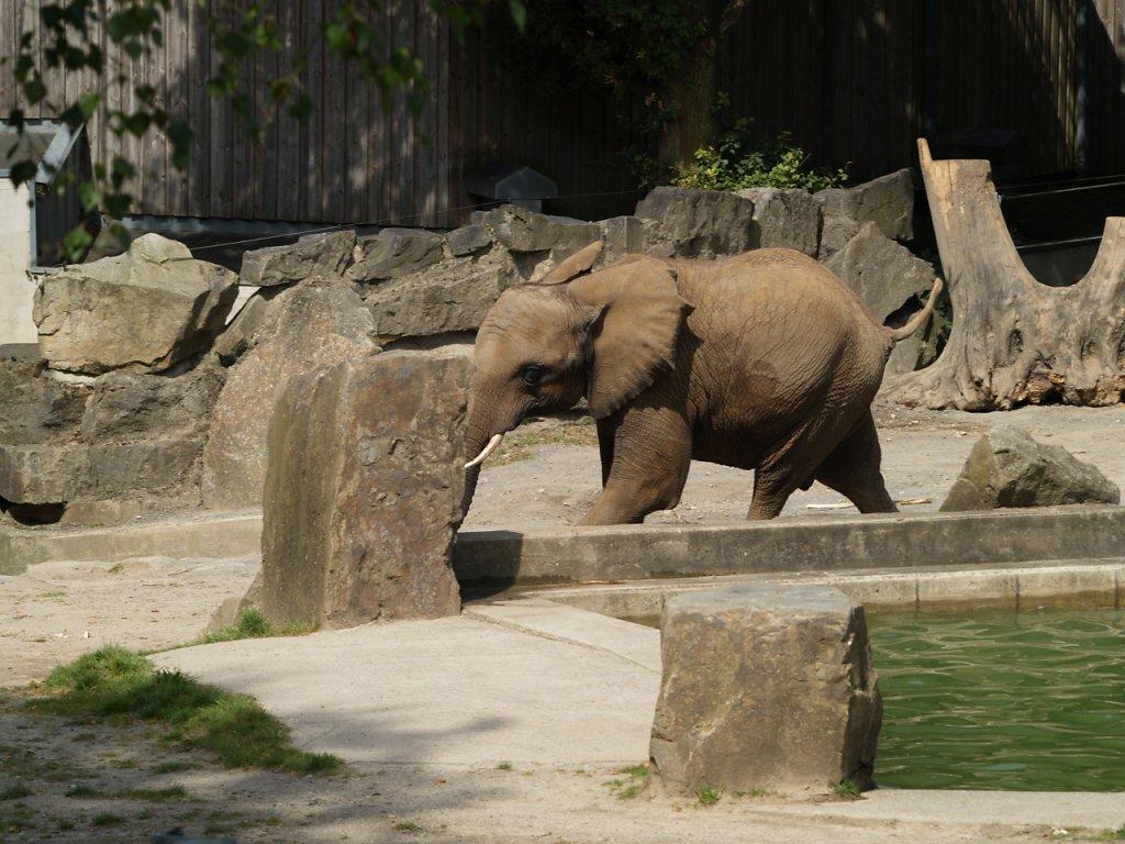 zoo__154_.JPG