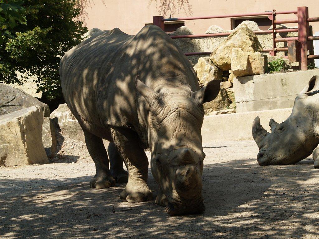 zoo__208_.JPG