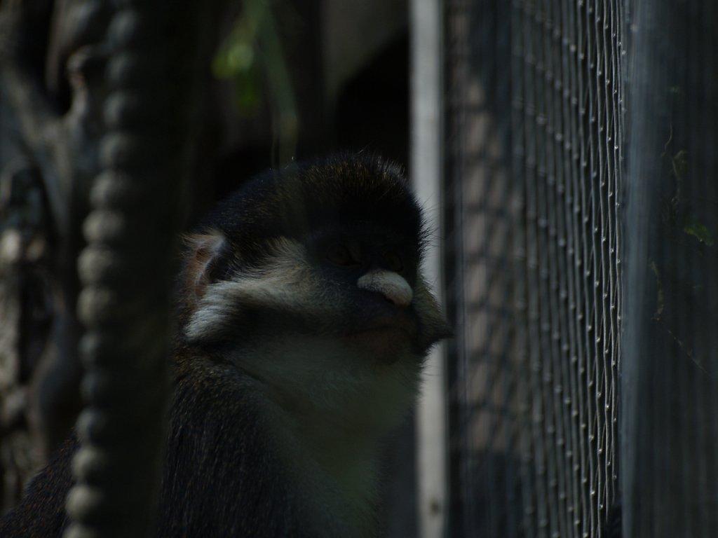 zoo__241_.JPG