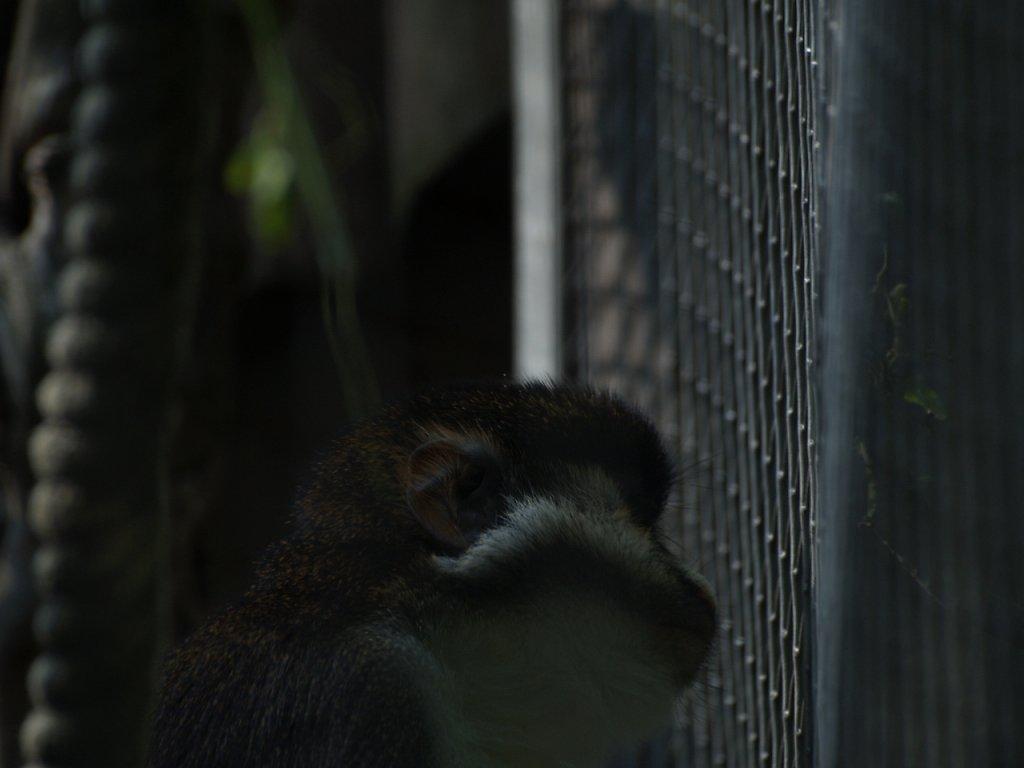 zoo__242_.JPG