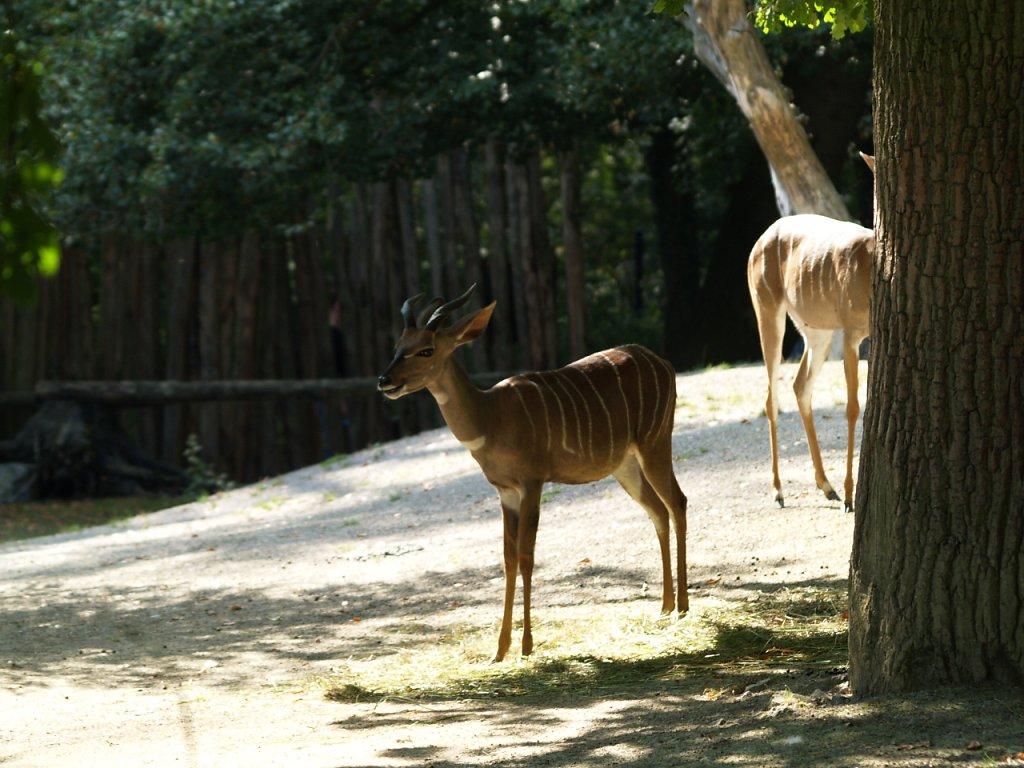 zoo__278_.JPG