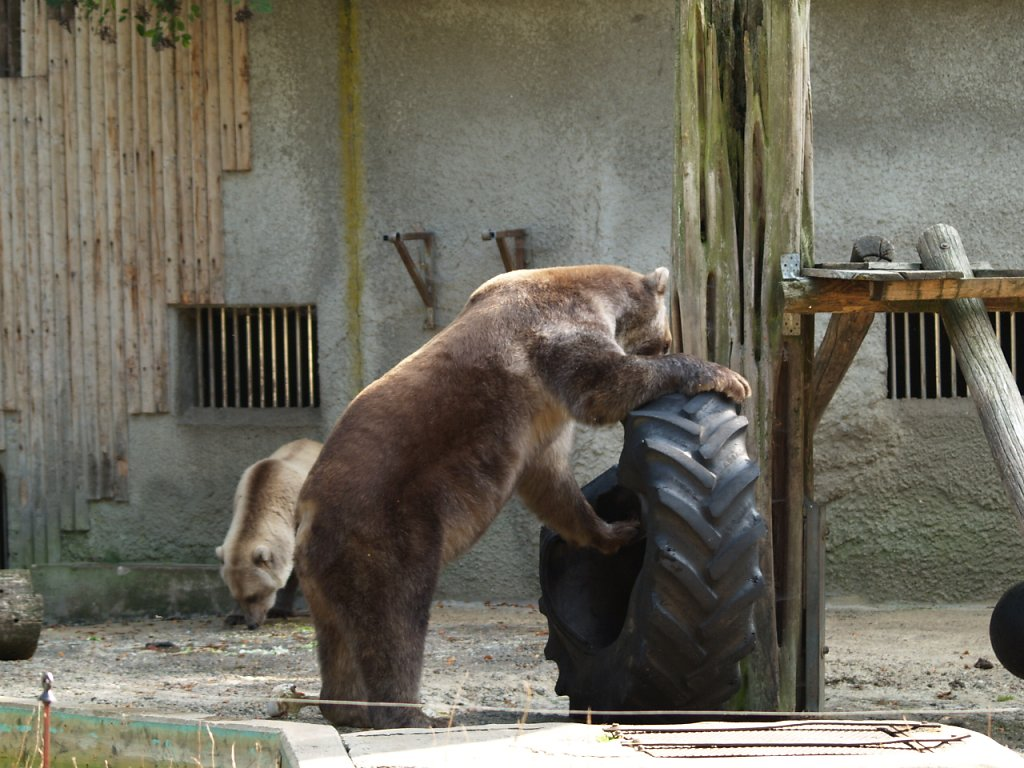 zoo__291_.JPG