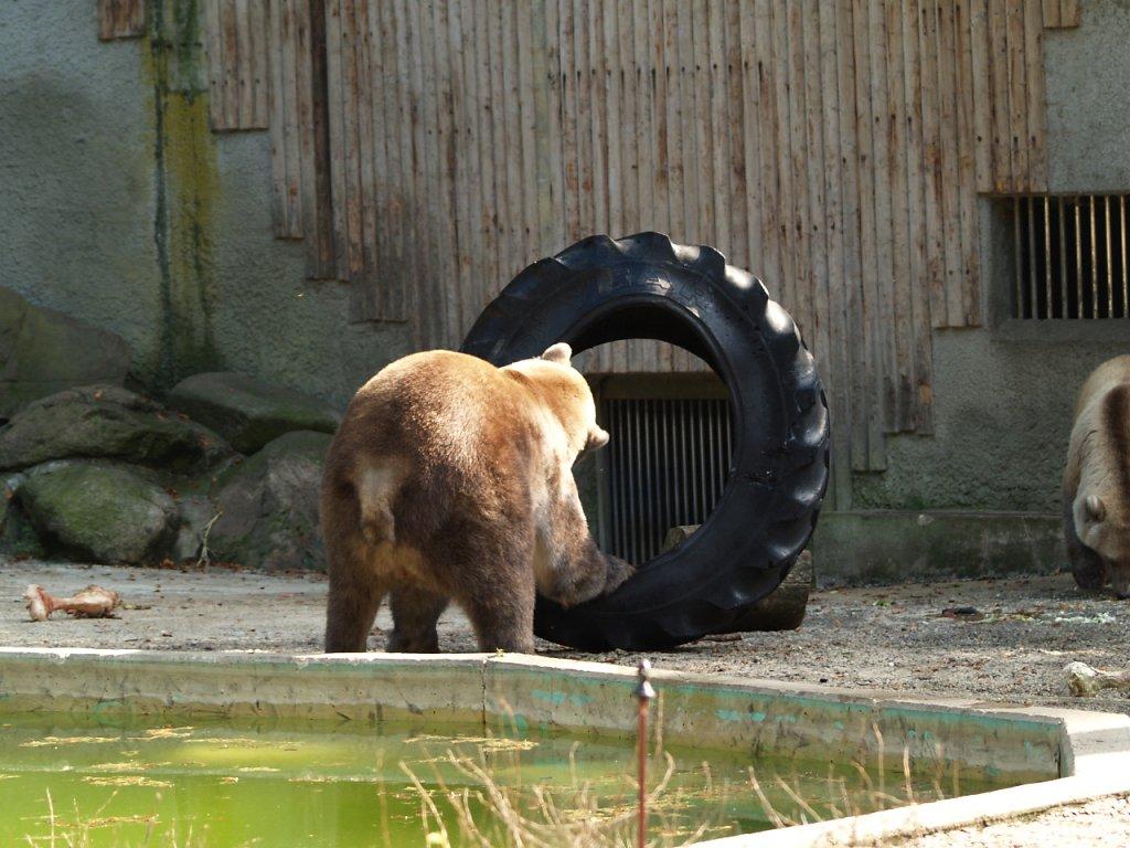 zoo__310_.JPG