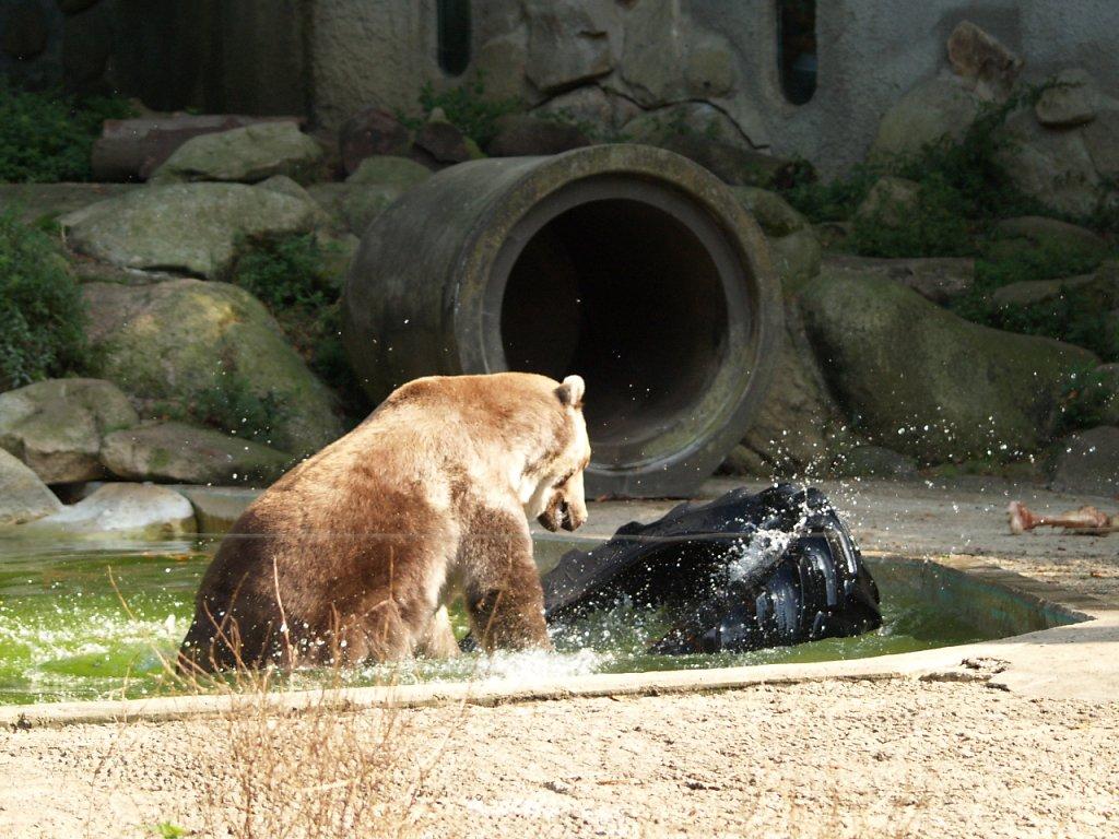 zoo__331_.JPG