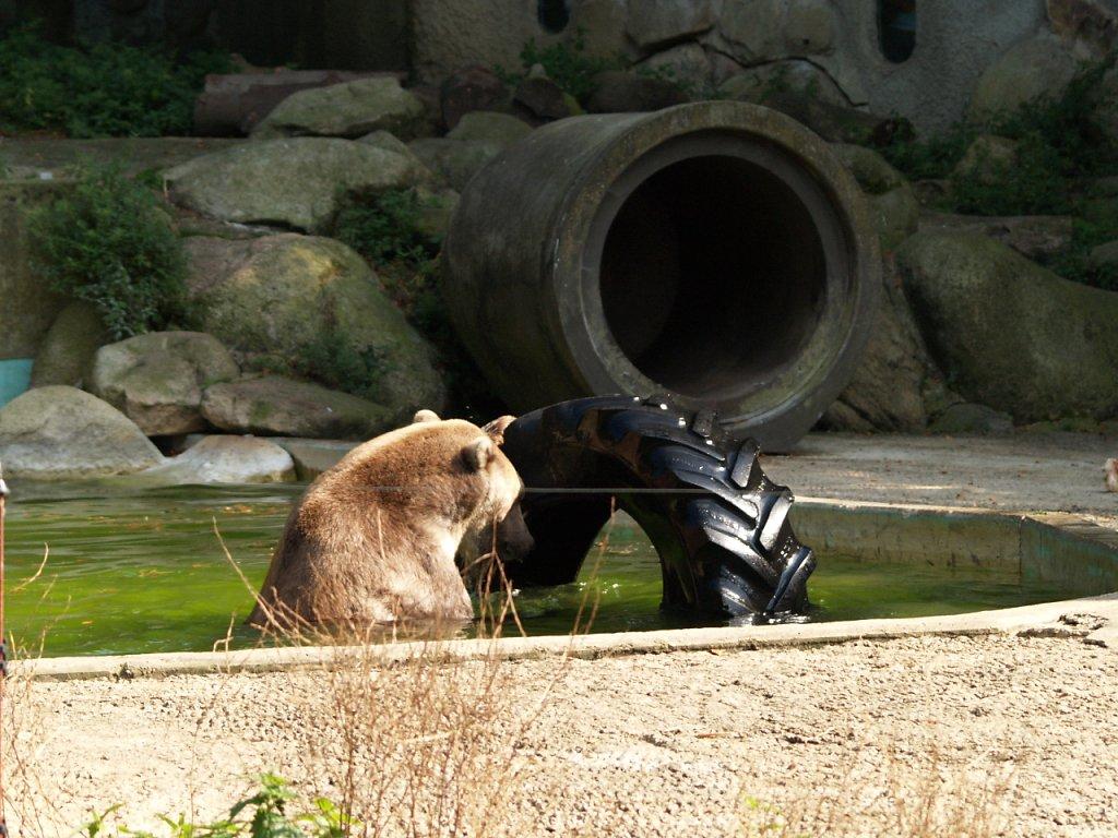 zoo__332_.JPG