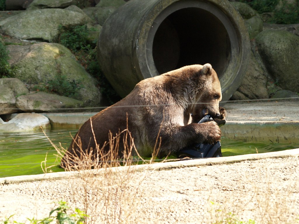 zoo__338_.JPG
