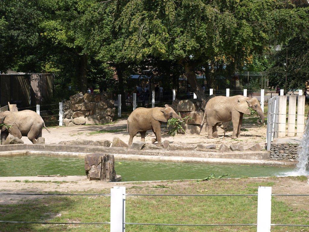 zoo__342_.JPG