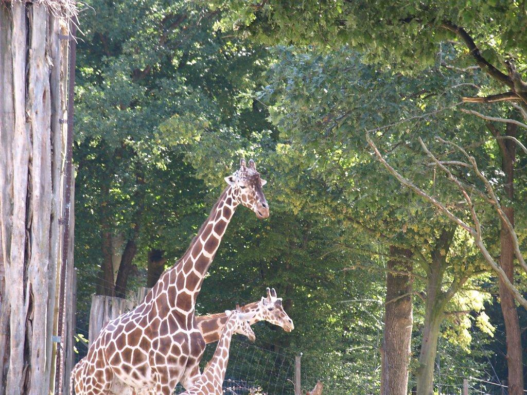 zoo__13_.JPG