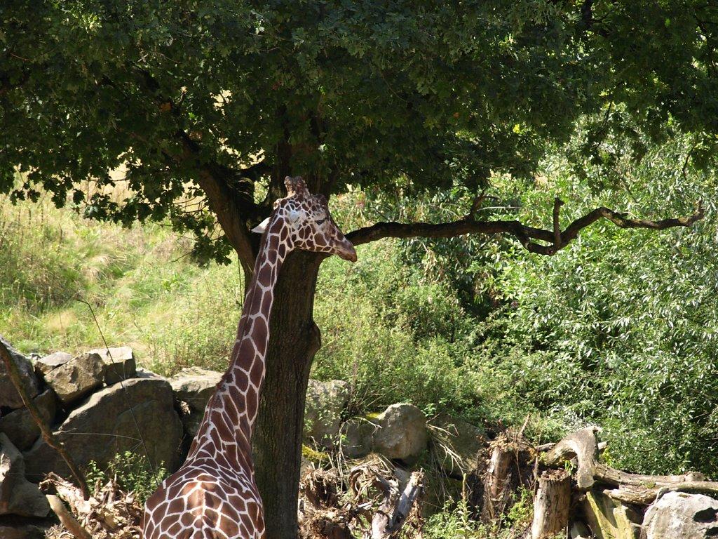 zoo__16_.JPG