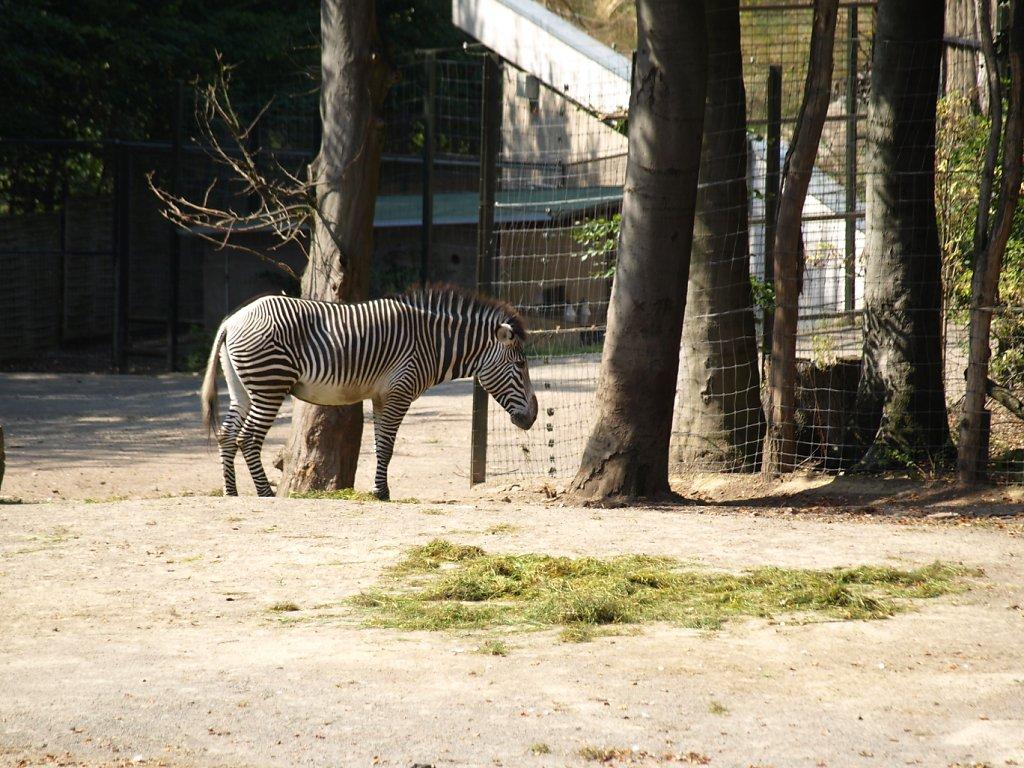 zoo__18_.JPG