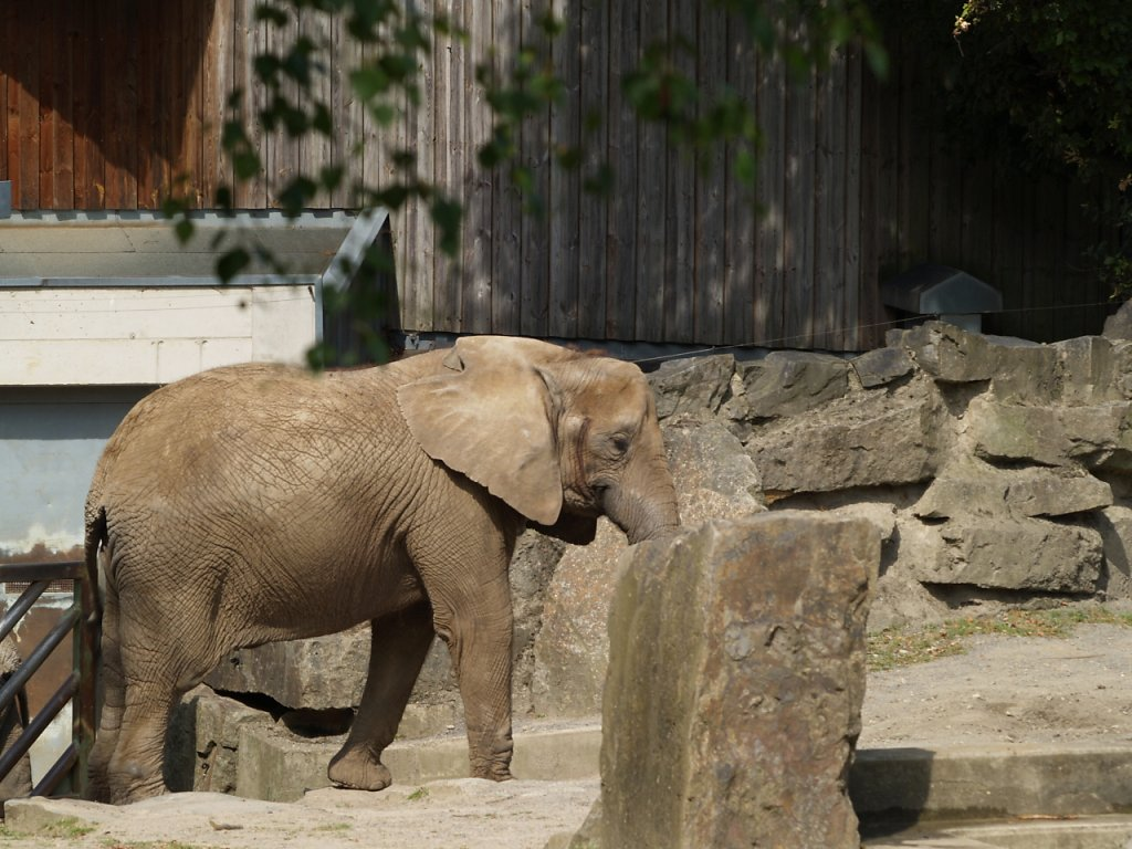 zoo__146_.JPG