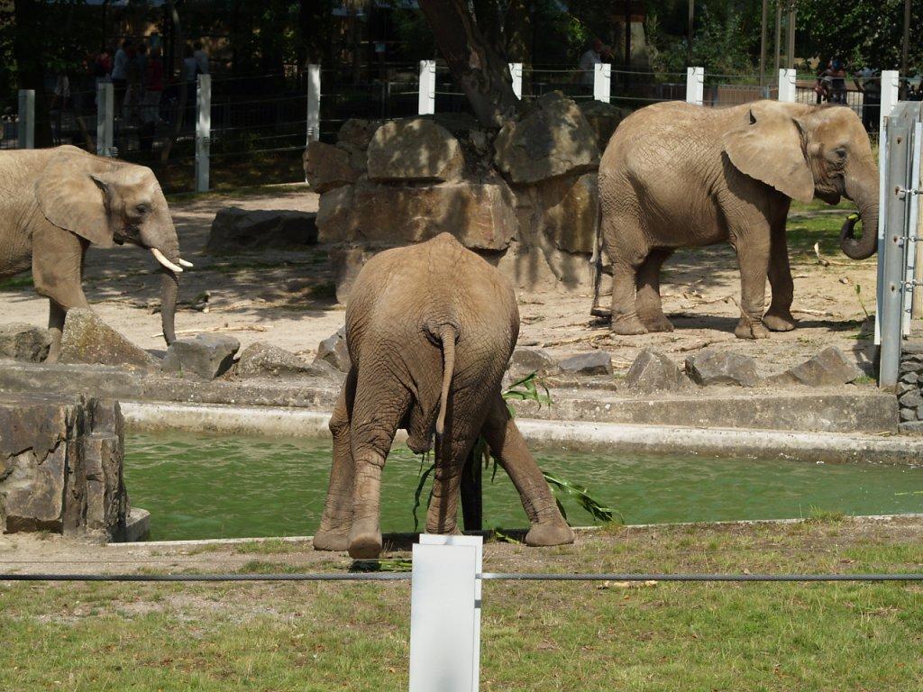 zoo__169_.JPG