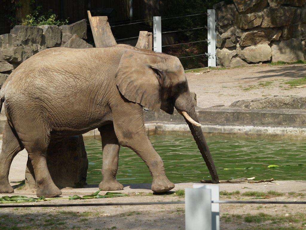 zoo__178_.JPG