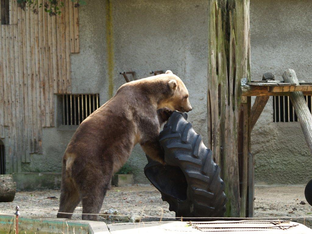 zoo__288_.JPG