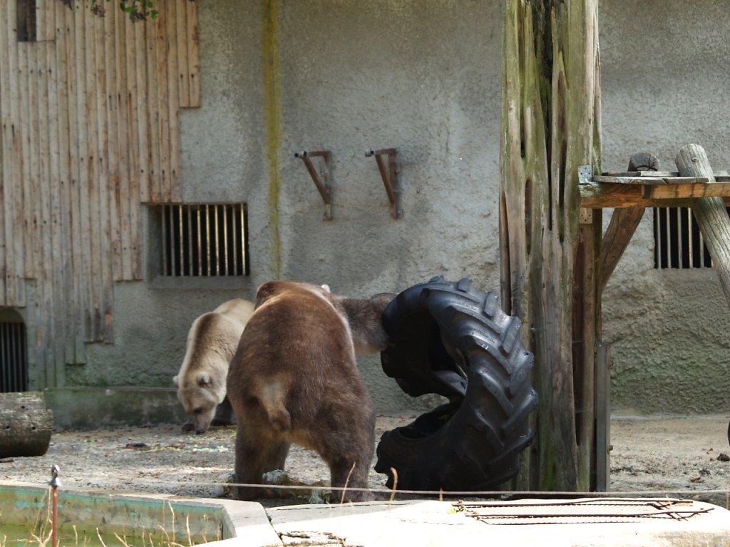 zoo__294_.JPG