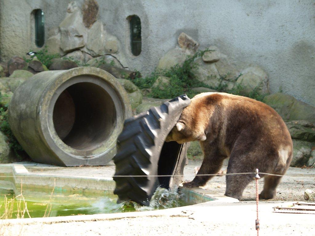 zoo__319_.JPG