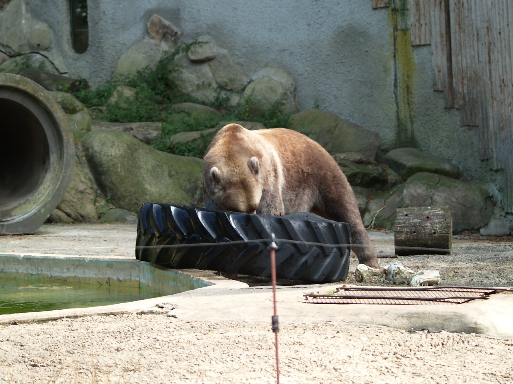 zoo__322_.JPG