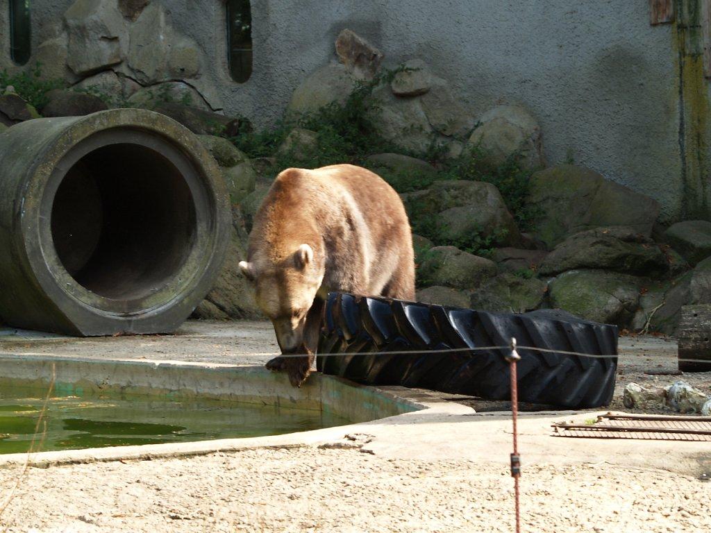 zoo__323_.JPG
