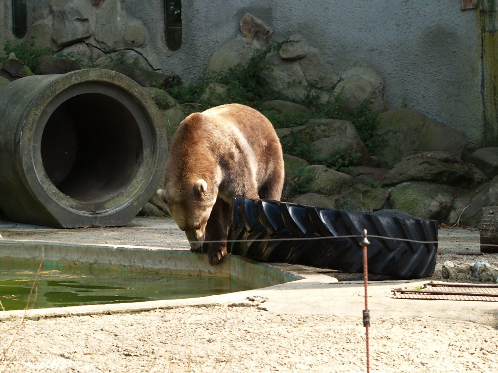 zoo__324_.JPG