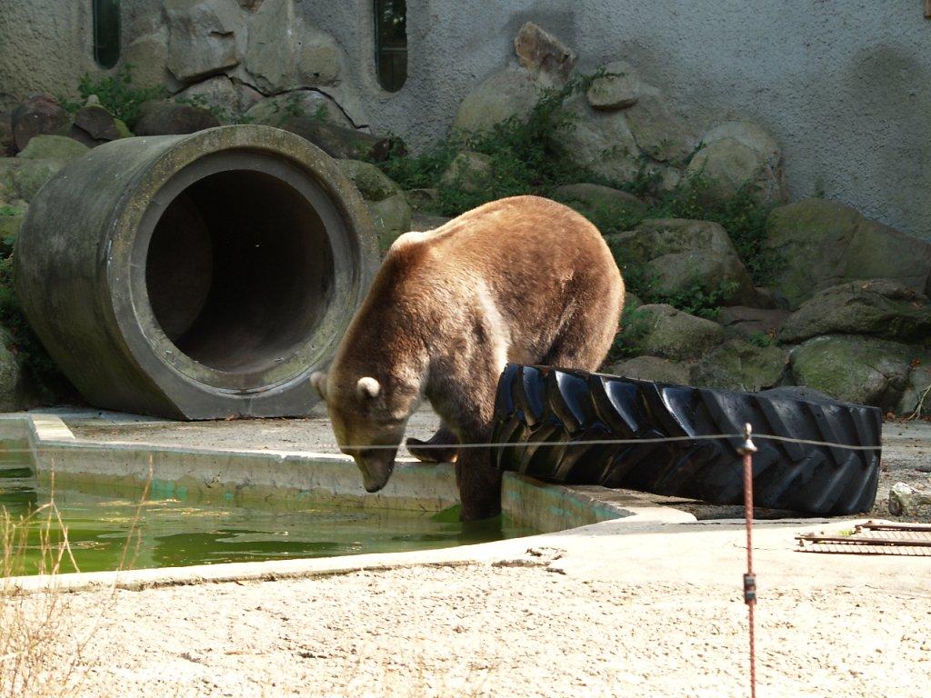 zoo__325_.JPG