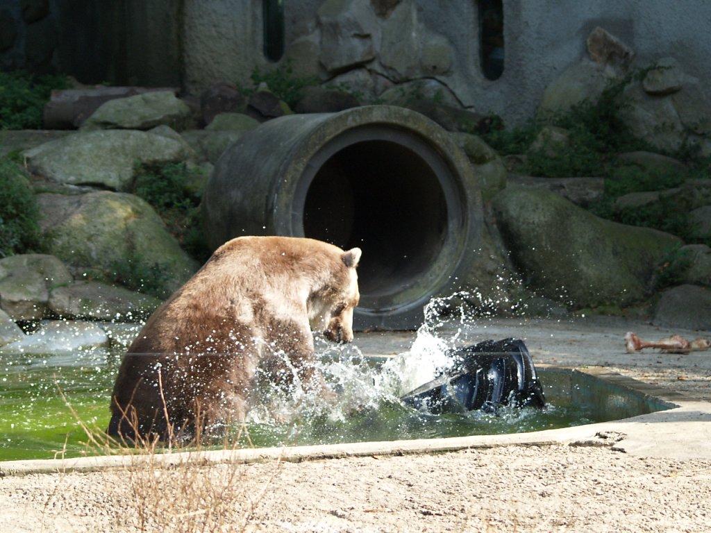 zoo__330_.JPG
