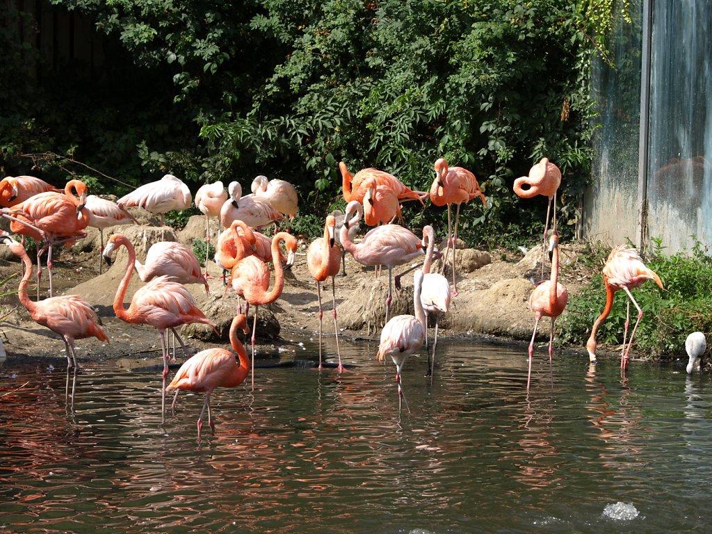 zoo__358_.JPG