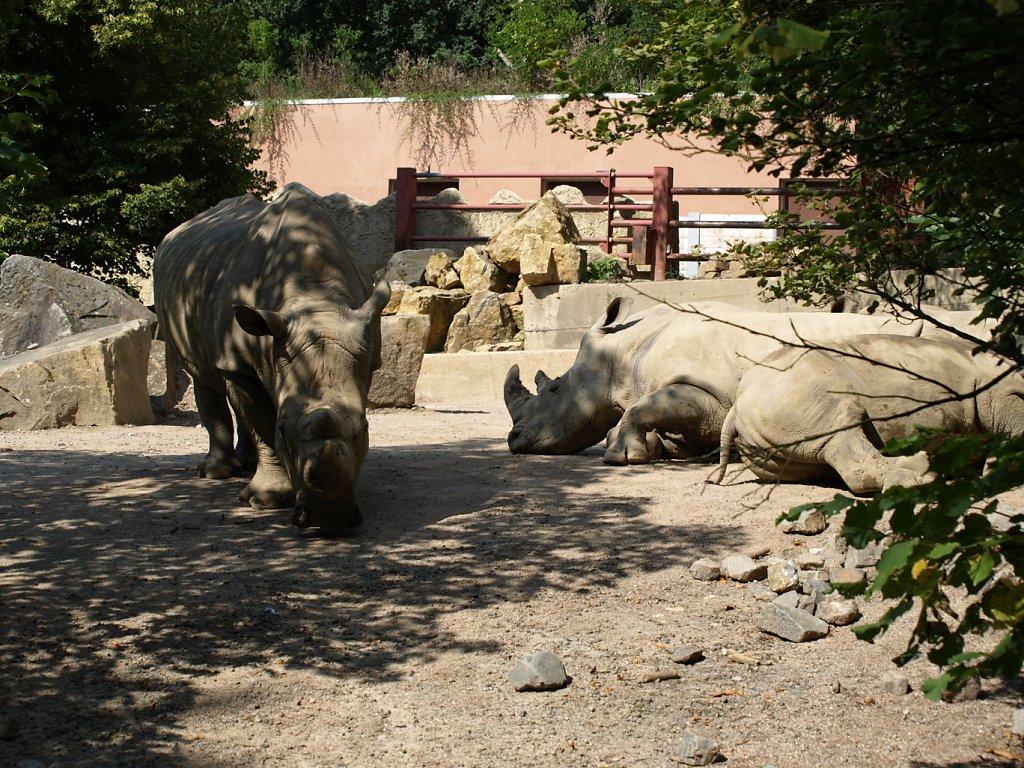 zoo__368_.JPG