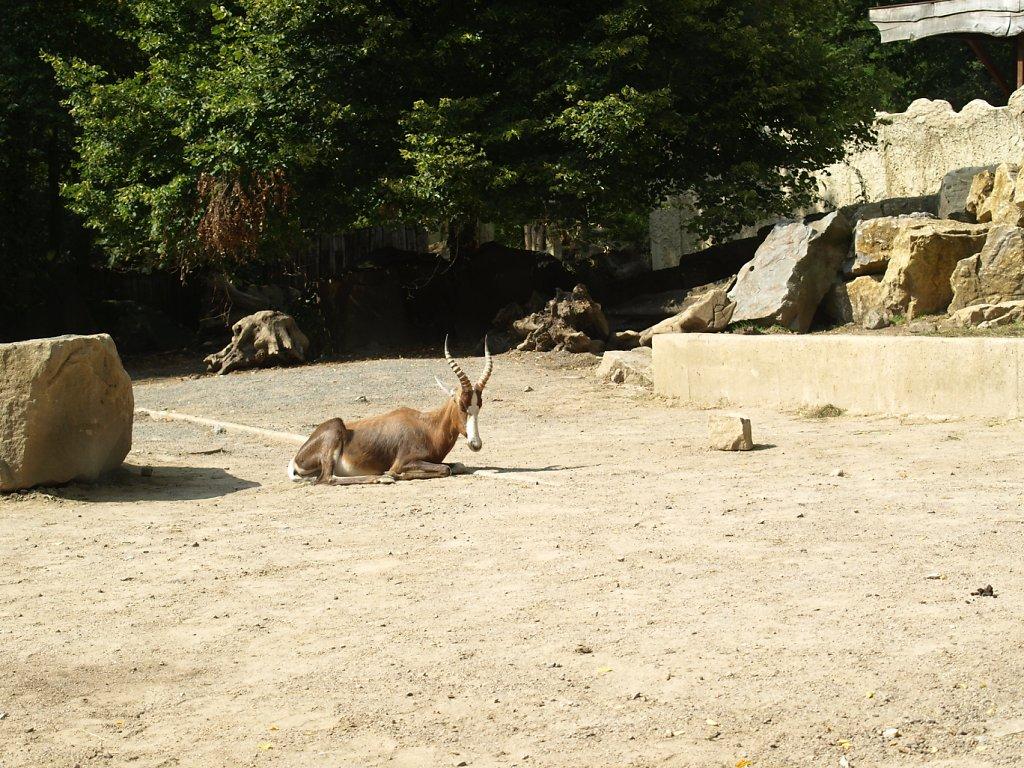 zoo__375_.JPG
